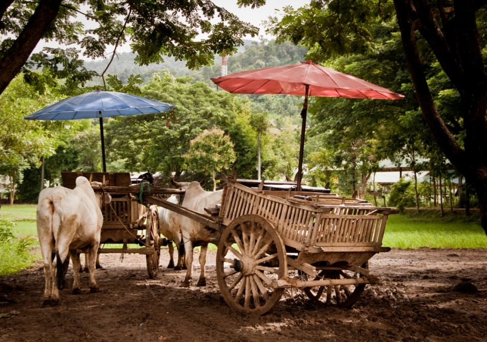 Ox carts in an elephant park in Thailand