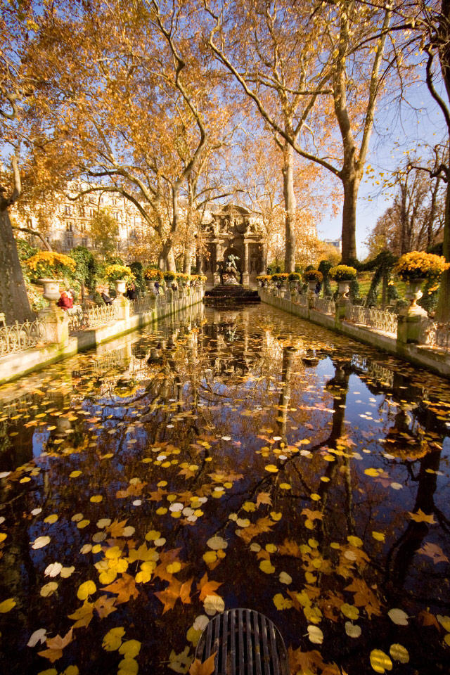 Autumn leaves floating in a small fountain pond in the Jardin de Luxembourg in Paris, France.