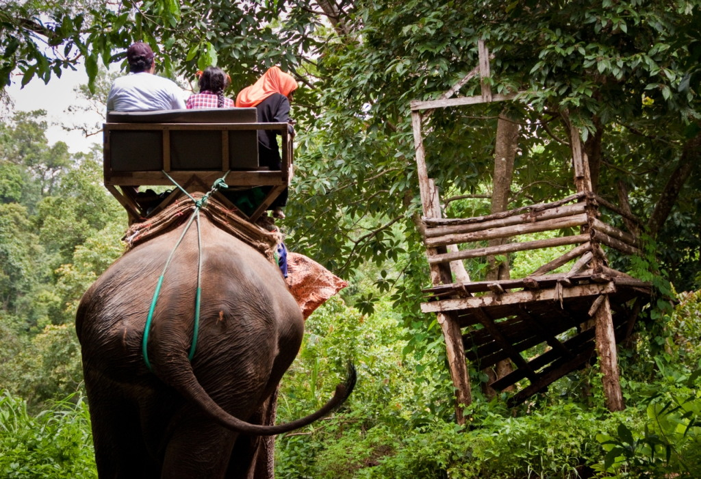 The Elephant Ride - Thailand