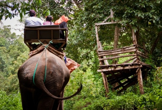 The Elephant Ride ~ Thailand