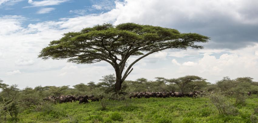 Tanzania Panorama created in Lightroom